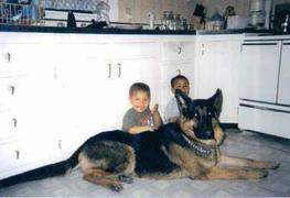 German Shepherd Dog Adult for sale - Past
